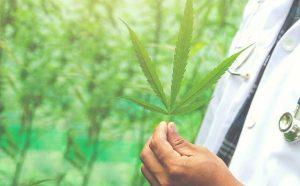 Cannabis pentru diabet
